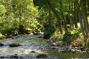 rivière2